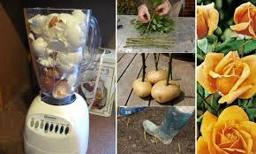 home design hacks 12 insanely clever gardening hacks home design garden