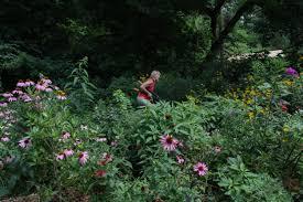 native plants journal mt cuba center lawn begone mt cuba center