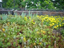 Green Homes Designs Case Study How To Install A Green Roof On A Private Home Curbed