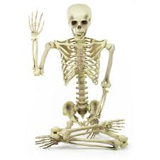 picture of a halloween skeleton amazon com bargain basement barney the famous 5 foot halloween