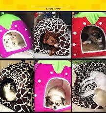 Rabbit Beds Aliexpress Com Buy Nuoyufan S Xxl Pet Dog Bed Warm Soft Houses