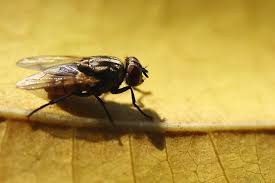What Are The Small Flies In My Bathroom How To Get Rid Of Flies Outdoors Step By Step