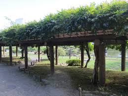 tokyo imperial gardens and hama rikyu tokyo kyoto trip 2013