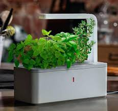 growing herbs indoors under lights herbal indoor garden growing herbs from seeds indoor herb garden how