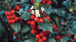 native plants in china showy winter shrubs to plant right now grow beautifully