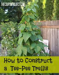 How To Grow Cucumbers On A Trellis Frugal Gardening How To Construct A Tee Trellis For About 5