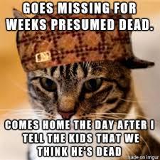 Ass Hat Meme - asshat cat meme on imgur
