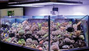 led reef lighting reviews best aquarium light in may 2018 aquarium light reviews