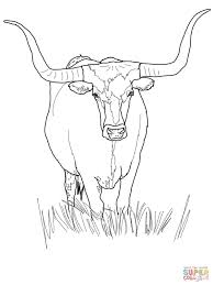 texas longhorn cattle coloring page free printable coloring pages