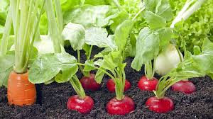 Grow Vegetable Garden by 21 Spring Vegetable Garden Plants Perfect For Spring Growing Season