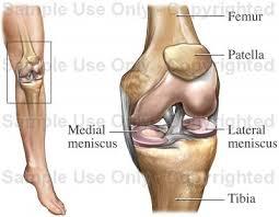 Interactive Knee Anatomy Anatomy Of The Knee Medical Illustration Human Anatomy Drawing