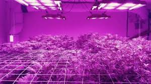 best led grow lights high times 2017 the best marijuana grow cabinets of 2018 420 light guide