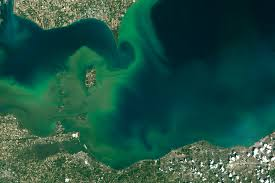 Satellite Map Of Florida by Algae Boom In Lake Erie Image Of The Day