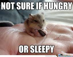 Sleepy Memes - 20 best sleepy memes sayingimages com