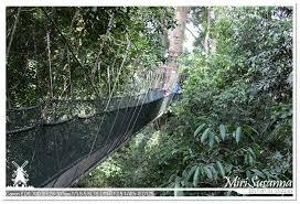 canap駸 but 17返馬 20170731 亞庇kk 4 poring canopy treetop walk