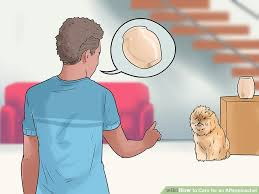 affenpinscher long hair 3 ways to care for an affenpinscher wikihow