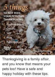 5 things to not feed your pets this thanksgiving cooked bones 2