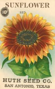 sunflower seed packets simple vintage seed packet pillows seed packaging sunflowers