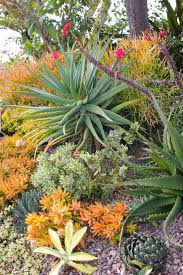 802 best succulent garden images on pinterest succulents garden