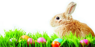 bunny easter 3 ways the easter bunny helps you your pool more aqua tech
