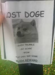 Lost Doge Meme - wtf why is that shibe doge meme so funny bodybuilding com forums