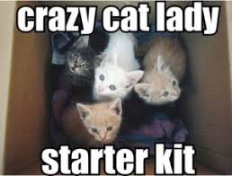 Crazy Lady Meme - crazy lady meme cat lady meme