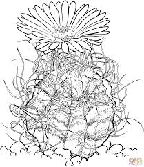 download coloring pages cactus coloring page cactus coloring