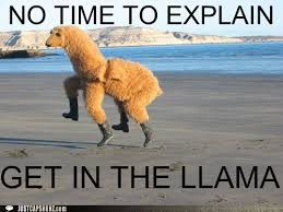 No Time To Explain Meme - animal capshunz no time to explain funny animal pictures with