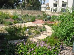 california wood nature s backyard a water wise garden plant of the month