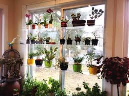 Window Sill Garden Inspiration Shelf Indoor Window Sill Plant Shelf With Hanging Rack And