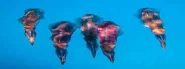 rainbow divers rainbow divers vietnam