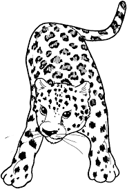 leopard print coloring pages