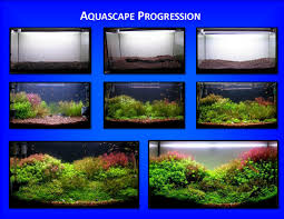 aquascape of the month march 2009