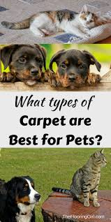 what is the best carpet for pets stainmaster petprotect vacuums