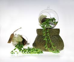 hanging glass globe terrarium kit with elegant string of pearls