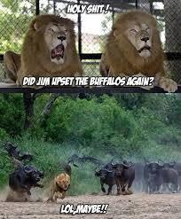 Lol Funny Meme - lol funny lions