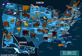 Untied States Of America Map by State Animals Of The U S A Map Jennifer Farley Illustration
