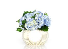 happy everything cookie jar s day event coton colors