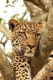 african safari animals best of african safari u0026 antarctica ice safari south africa