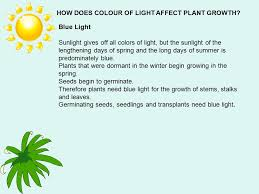 how does light affect plant growth plants and light ppt video online download
