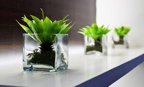 Best Plant For Office Desk Desk The10 Best Office Plants Amazing Plants For Office Desk