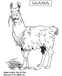 coloring pages of flames zoo animal coloring page llama exhibit desenhos para colorir