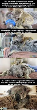 High Koala Meme - 98 best different types of funny animal memes images on pinterest