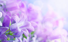 beautiful flowers wallpaper 12d hd wallpaper blue wallpaper