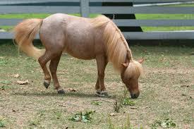 roan horse wikipedia
