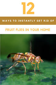 What Are The Small Flies In My Bathroom How To Get Rid Of Fruit Flies 12 Ways To Kill Fruit Flies Instantly