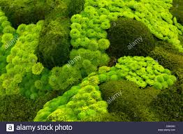 Rock Garden Succulents Mosses And Rock Garden Succulents Stock Photo 53896827 Alamy