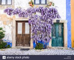 wisteria old house stock photos u0026 wisteria old house stock images