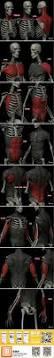 Human Anatomy Male 875 Best Anatomy References Body Images On Pinterest Anatomy