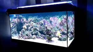 led reef lighting reviews arcadia classica led over tank luminaire youtube